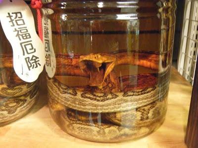 habu-sake-japanese-snake-wine 7