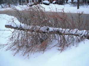 dead xmas tree